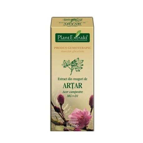 Extract din muguri de ARŢAR 50ml - Acer campestre