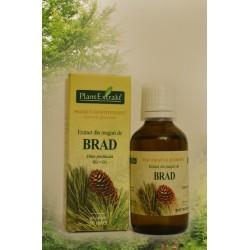 Extract din muguri de Brad - 50 ml