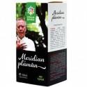 Meridian Plaman - Santo Raphael