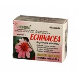 Echinacea - Hofigal